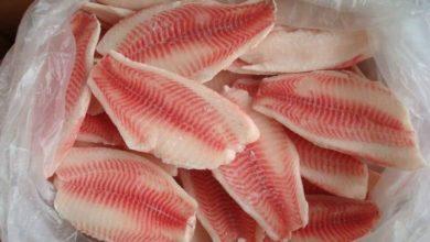 صورة أسعار الاسماك المجمدة فى مصر 2021