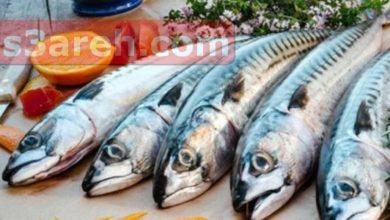 صورة أسعار السمك اليوم فى مصر